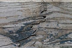 与油漆的老木纹理 免版税图库摄影