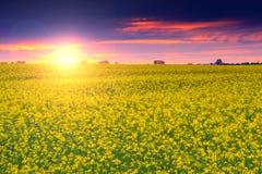与油菜,特兰西瓦尼亚,罗马尼亚的领域的夏天风景在日出的 免版税库存图片