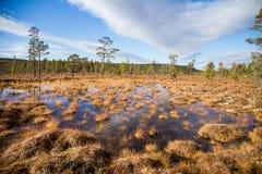 与沼泽的一个美好的秋天风景在Femundsmarka国家公园在挪威 五颜六色的秋天风景 库存图片