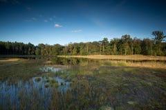 与沼泽的市分风景在前景 库存照片