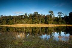 与沼泽的市分风景在前景 免版税库存图片