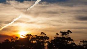 与沿海植被的日落风景 库存图片