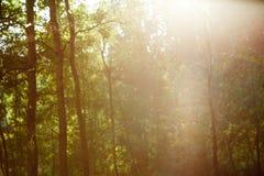与泄漏和bokeh的葡萄酒减速火箭的被弄脏的森林风景 免版税库存照片