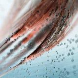 与泡影的五颜六色的水下的蒲公英种子 免版税库存照片