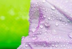 与泡影的宏观紫色花在绿色弄脏了背景 库存图片