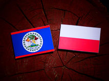 与波兰旗子的伯利兹旗子在被隔绝的树桩 库存例证