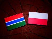 与波兰旗子的冈比亚旗子在被隔绝的树桩 皇族释放例证