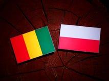 与波兰旗子的几内亚旗子在被隔绝的树桩 库存例证