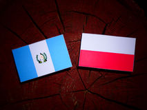 与波兰旗子的危地马拉旗子在被隔绝的树桩 皇族释放例证