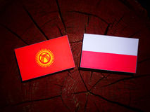 与波兰旗子的吉尔吉斯斯坦旗子在被隔绝的树桩 皇族释放例证