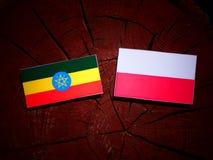与波兰旗子的埃赛俄比亚的旗子在被隔绝的树桩 皇族释放例证