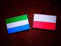 与波兰旗子的塞拉利昂旗子在被隔绝的树桩 皇族释放例证