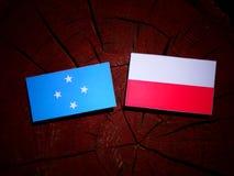 与波兰旗子的密克罗尼西亚旗子在被隔绝的树桩 库存例证
