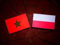 与波兰旗子的摩洛哥旗子在被隔绝的树桩 向量例证