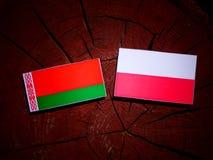 与波兰旗子的白俄罗斯旗子在被隔绝的树桩 皇族释放例证