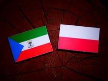 与波兰旗子的赤道几内亚旗子在被隔绝的树桩 皇族释放例证