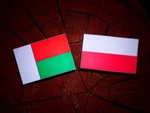 与波兰旗子的马达加斯加旗子在被隔绝的树桩 库存例证