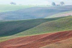 与波浪小山,绿色和棕色领域的Minimalistic风景 库存图片