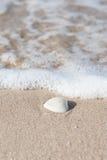 与波浪的壳 库存照片
