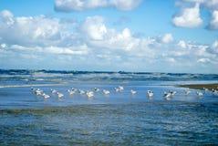 与波浪的海鸥 免版税库存图片