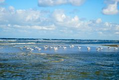 与波浪的海鸥 库存图片