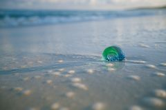 与波浪的玻璃热带海壳在太阳光下 图库摄影