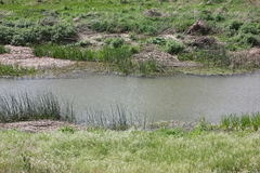 与波纹的一条小河从风 图库摄影