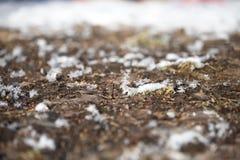 与泥的冰晶 库存图片