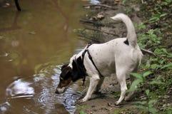 与泥的狗 库存照片