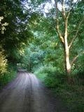 与泥铺跑道的英国树木丛生的区域 库存照片