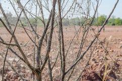 与泰国死的树的老蜘蛛网 库存照片