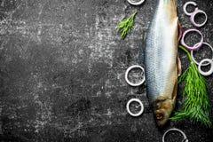 与洋葱圈和莳萝的盐味的鲱鱼 库存照片