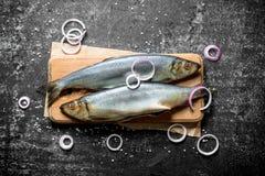 与洋葱圈的盐味的鲱鱼 免版税图库摄影