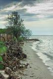 与流入树的海滨在风暴以后 免版税库存照片