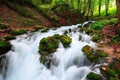 与流经在生苔石头中的山河的秋天风景清楚的水五颜六色的森林柔滑的光滑的小河  库存图片