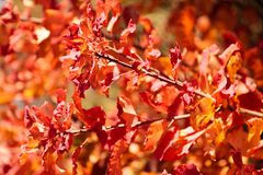 与浅景深的五颜六色的叶子在秋天的一个公园 图库摄影