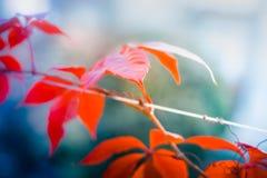 与浅景深的五颜六色的叶子在秋天的一个公园 免版税库存图片