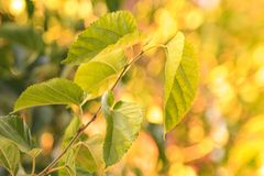 与浅景深的五颜六色的叶子在秋天的一个公园 库存照片