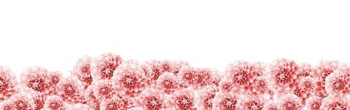 与浅粉红色的白色大丽花的大丽花花卉边界框架背景开花特写镜头颜色定调子与粉红彩笔纹理边界 免版税图库摄影