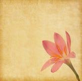 与浅粉红色的百合的老纸 免版税库存照片