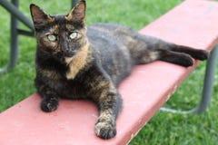 与浅绿色的眼睛的谷仓猫 免版税库存照片