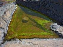 与浅绿色的algas的海水水坑 免版税库存照片