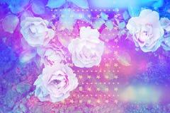 与浪漫桃红色玫瑰的美好的艺术性的背景 库存照片