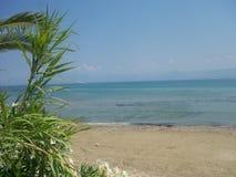 与海和树的海滩 库存图片