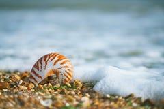 与海壳的了不起的英国夏天Pebble海滩 免版税图库摄影
