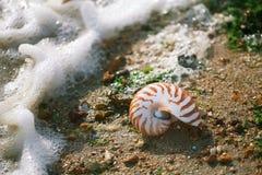 与海壳的了不起的英国夏天Pebble海滩 免版税库存图片