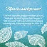 与海壳的明信片设计 手拉的向量例证 剪影海轰击与装饰品的元素 背景飞行海洋海鸥天空 库存图片