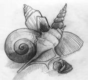 与海壳的静物画 免版税库存照片