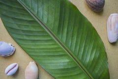 与海壳的香蕉叶子平的照片背景 夏天热带背景 库存图片