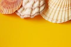 与海壳的黄色背景 免版税库存照片